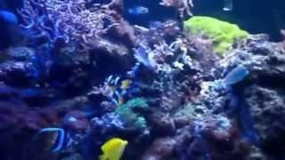 Aquarium Designs Unlimited 1000 Gal Fish Tank Daytime View