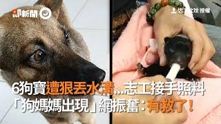 6狗寶遭狠丟水溝...志工接手照料 「狗媽媽出現」網振奮:有救了!