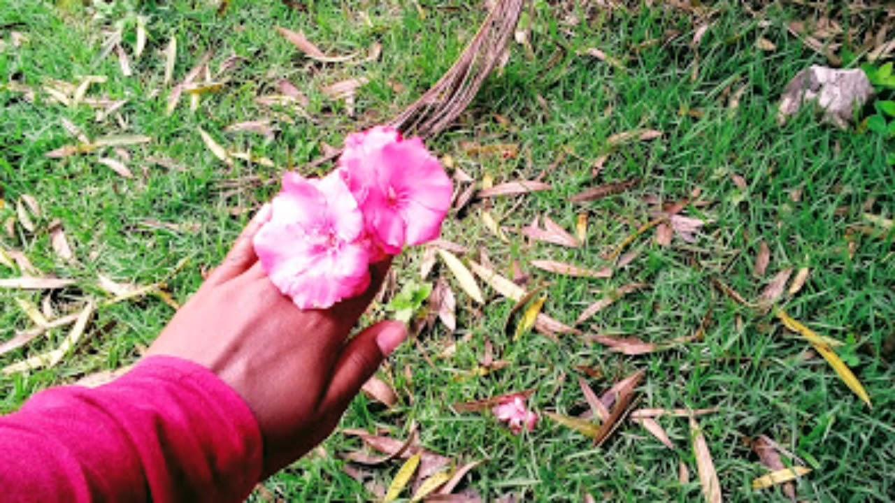 Fotos Tumblr Da Natureza Youtube