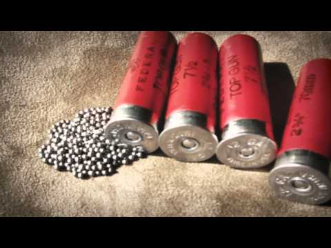 Understanding Shotgun Ammo For Hunting