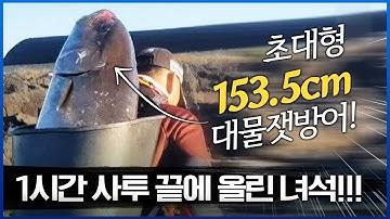 전용 지게로 운반하는 괴물 잿방어_회 뜨는데만 1시간이나 걸려요 #평생 한번 볼까 말까 한 사이즈! 버릴게 없는 잿방어  #대물잿방어 #잿방어회 #잿방어머리구이 #서귀포 #낚시