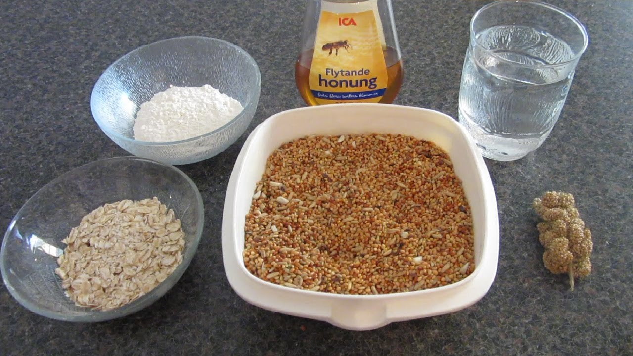 How to make healthy homemade bird treats all birds youtube forumfinder