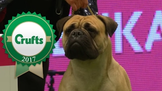 Junior Warrant Competition | Crufts 2017