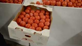 How long does it take to pack tomatoes?