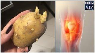 Ростки картофеля для восстановления суставов