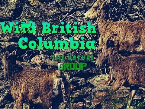 Wild British Columbia