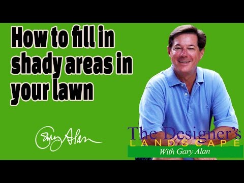 How to fill in Shady Areas in your lawn