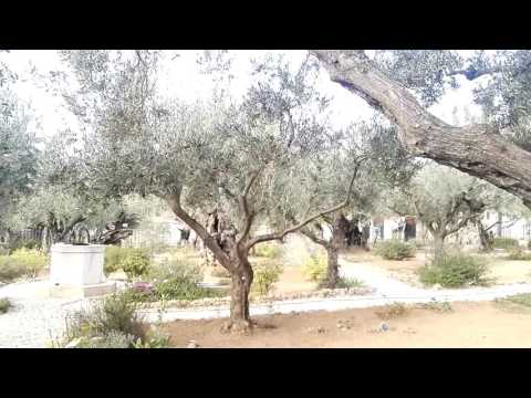 Gethsemane - the place where Jesus prayed and his disciples slept the night before the crucifixion.