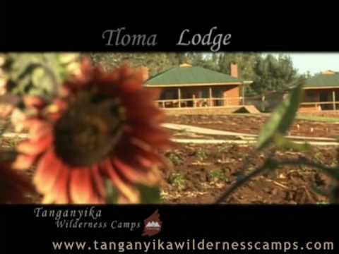 African Safari in Tanzania - Ngorongoro - Karatu - Tloma Lodge