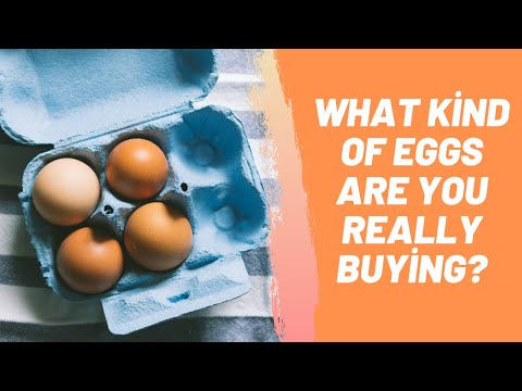 What Kind Of Eggs Are You Really Buying?