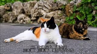 作詞:朝久義智 作曲:谷山浩子 編曲:平野孝幸 シングル「ごめんね」のB面 1981年 ※これも「ギャルギャルコーベ」から生まれた歌。猫が...