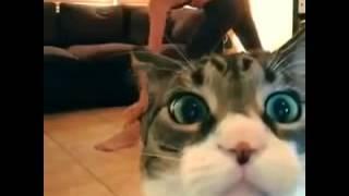 Полный ржач  кот снимаеся вместо девушки приколы над животными 2014 декабрь