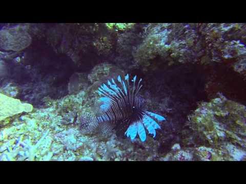 Cayman Trip Video