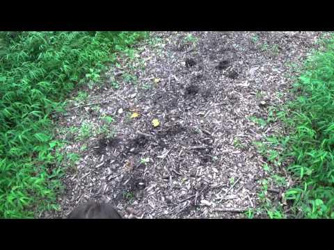 Fort Garrison Elementary School Nature Trail-- Deer Sighting -- July 29, 2014
