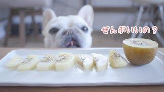 愛犬こうめさん昨年のキウイデビューからほぼ1年ぶりに再び実食! 「丁...
