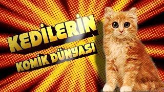 Kedilerin Komik Dünyası