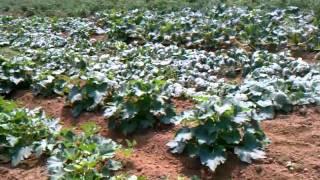 Fresh vegetables in nj