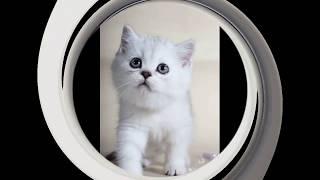 Лучшие фото и видео про котят 2019 😻 Трое милых котят кошки Хлои 🐱 kittens