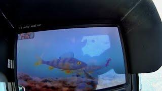 Зимняя рыбалка с дешёвой подводной камерой Ловим вприглядку