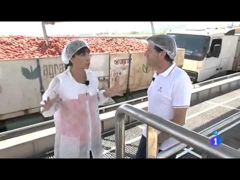 Comando Actualidad  Villafranco del Guadiana   Cultivo para la produccio¦ün de tomate concentrado