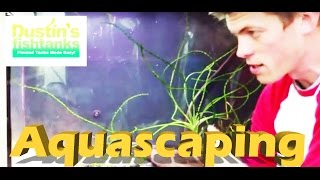 How to Aquascaping a Planted Aquarium,  Planted Aquarium design