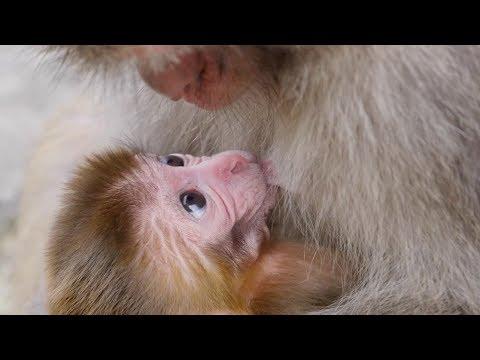 Hope is the best of things - meet Stumpy's baby :)