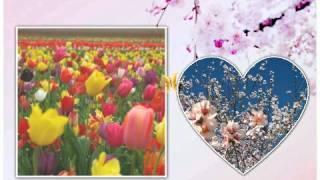 Kizoa - Video con foto: immagini primavera