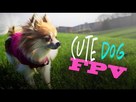 Til Drones Do Us Part Ep 1: Cute Dog & Flying FPV