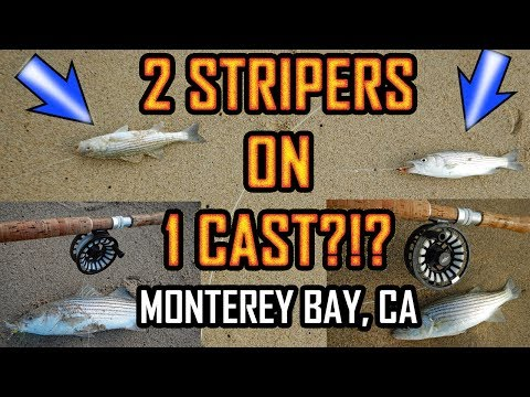 INSANE STRIPER FISHING: MONTEREY BAY: Fly Fishing The Surf In Marina, CA