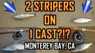 INSANE STRIPER FISHING: MONTEREY BAY: Fly Fishing The Surf in Marina, CA