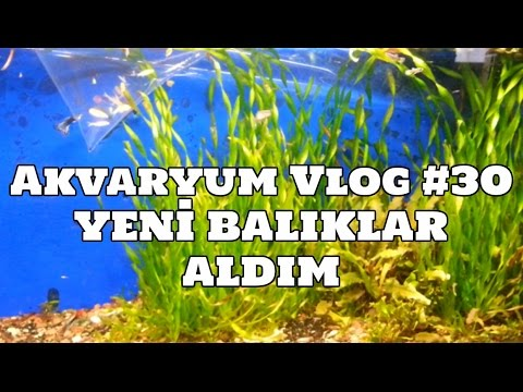 Hobihanem - Akvaryum Vlog #30 (Yeni Balıklar Aldım) [05.03.2017]