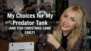 Choosing Fish for My Predator Tank (PLUS FISH CHRISTMAS)
