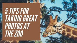 5 Tips For Taking Great Photos At The Zoo with Laurie Rubin