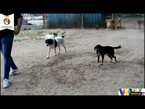 Associação dos Amigos dos Animais de Coruche  - Canil.