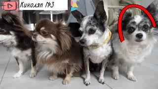 Киноляпы на канале  Magic Pets. В серии Короче говоря Зомби Апокалипсис Глазами Кошки и Собаки.