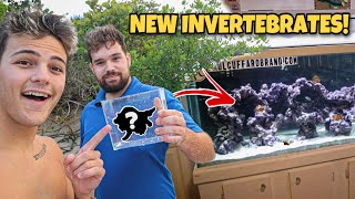 CATCHING INVERTEBRATES for My SALTWATER TANK!!