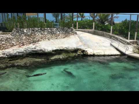 Sealions at Blue Lagoon Nassau -BAHAMAS.