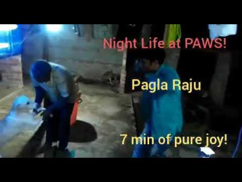 Night life at PAWS.