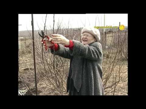 Видео: весна,не