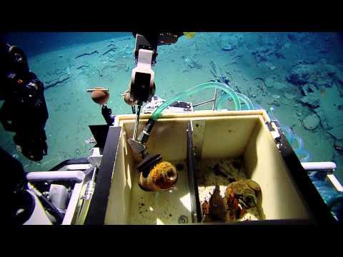 Shipwreck 15577 Artifact Recovery | Nautilus Live