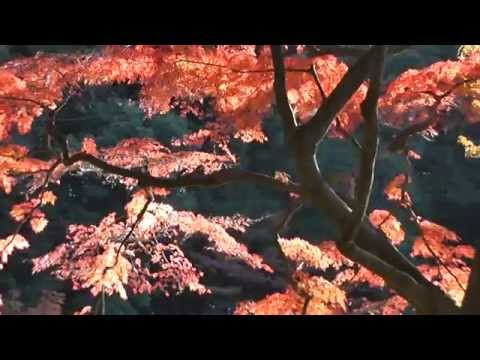 Vol 2-3 Rikugien & Koishikawa Korakuen Gardens with Songs Thurs 28 & Fri 29 Nov 2013.