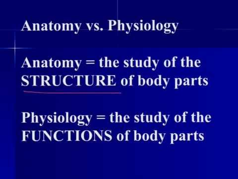 Anatomy & Physiology Overview - YouTube