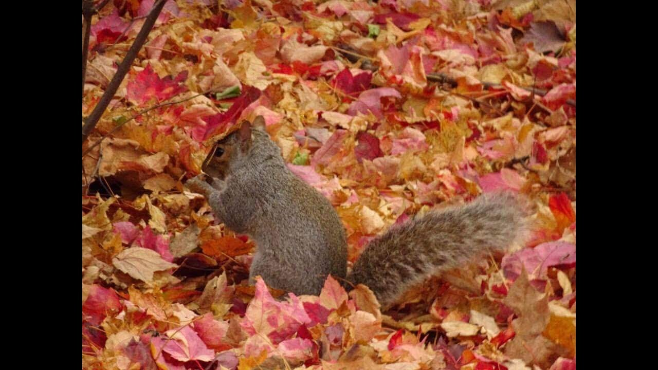 How Do Squirrels Get Into Attics And How To Prevent Damage