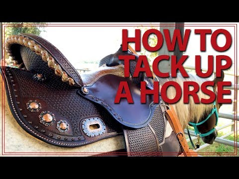 How to Saddle a Horse (Western Style) | Jeffers Equine