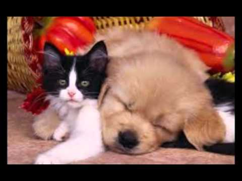 chien et chat trop mignon youtube. Black Bedroom Furniture Sets. Home Design Ideas