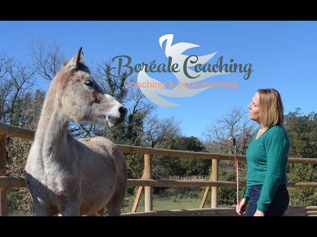 Coaching par le cheval : pour qui, comment, pour quoi ?