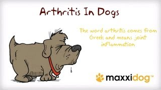 Arthritis in dogs - How to Identify and Prevent Dog Arthritis