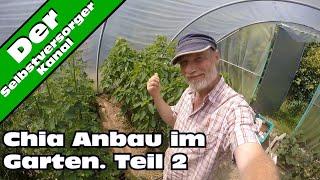 Chia Anbau in Deutschland Das Ergebnis Teil 2