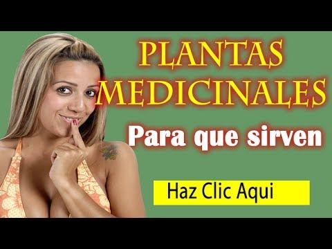Plantas medicinales y para que sirven tipos y beneficios for Plantas ornamentales y medicinales