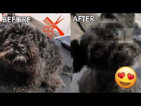 STEVE THE DOG AMAZING GROOMING TRANSFORMATION
